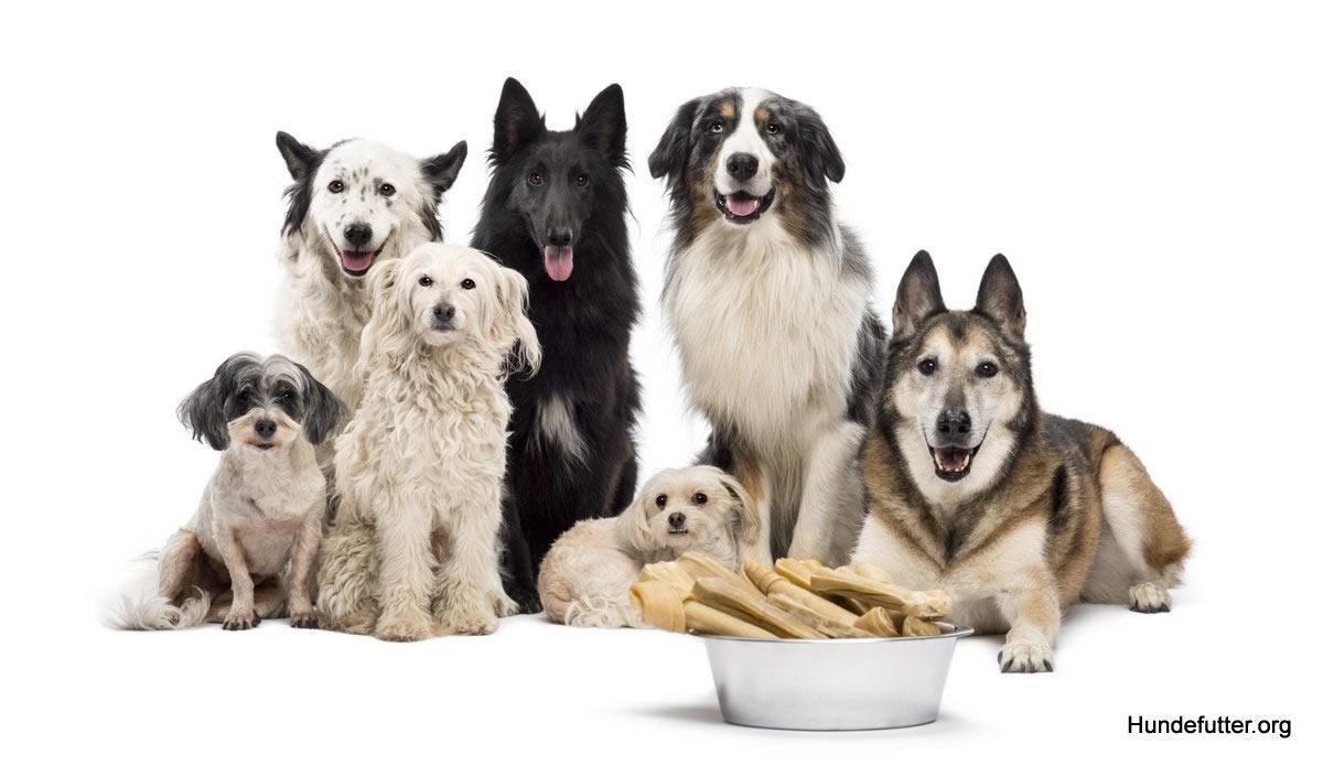 Hundefutter in Weimar - Online-Shop: Tierfutter, Katzenfutter, Barf, Hundernahrung, bestes Futter / Tockenfutter für Hunde und Welpen